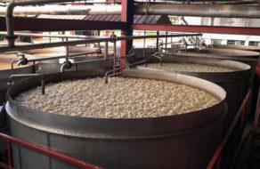 fermentace